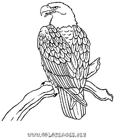 Dessin de aigle colorier les enfants - Coloriage aigle ...