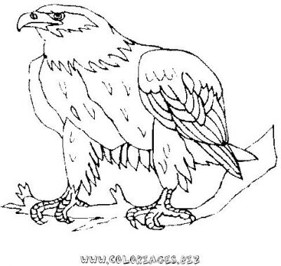 Coloriages aigles page 1 animaux - Coloriage aigle ...