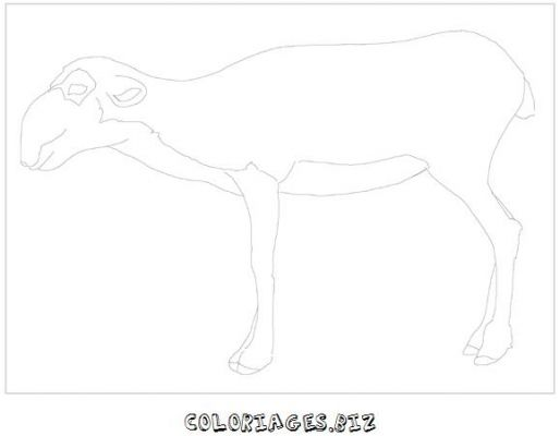 animaux-coloring_22.jpg