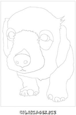 animaux-coloring_23.jpg