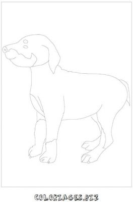 animaux-coloring_24.jpg