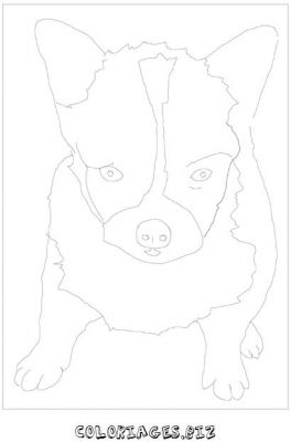 animaux-coloring_25.jpg