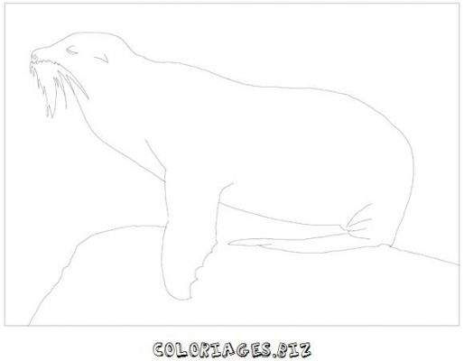 animaux-coloring_30.jpg