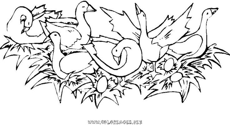 coloriage_animaux_62.JPG