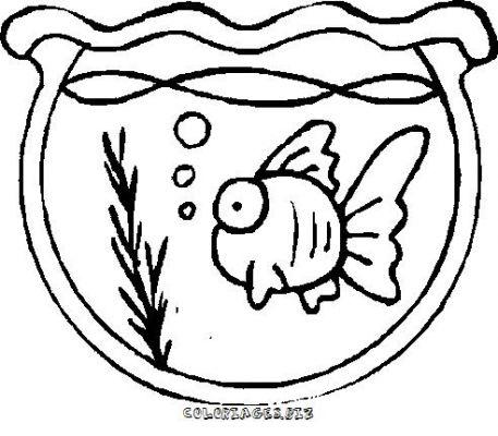 Le blog de thierry ne faites pas les poissons rouges for Aquarium poisson rouge dessin