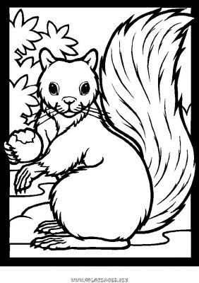 Dessin a colorier gratuit ecureuil - Image automne gratuite imprimer ...