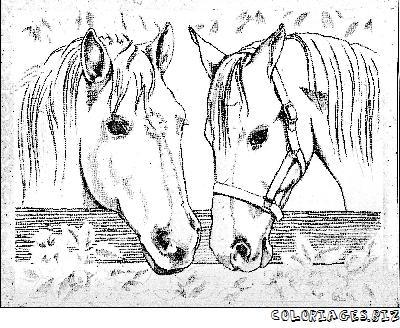 """L'image """"http://www.coloriages.biz/albums/photos/chevaux/2chevaux.jpg"""" ne peut être affichée car elle contient des erreurs."""