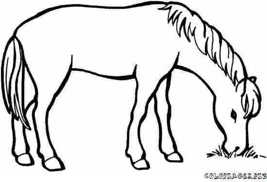 Coloriage du cheval qui mange - Coloriage cheval sauvage ...