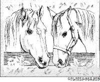 2chevauxjpg coloriage de chevaux
