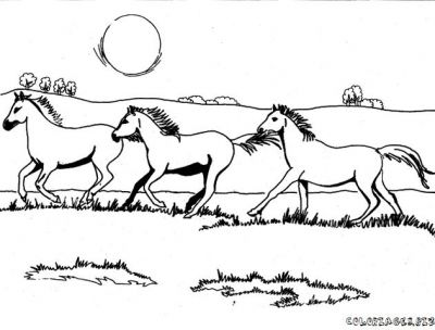 Coloriages cheval page 12 animaux - Coloriage chevaux ...