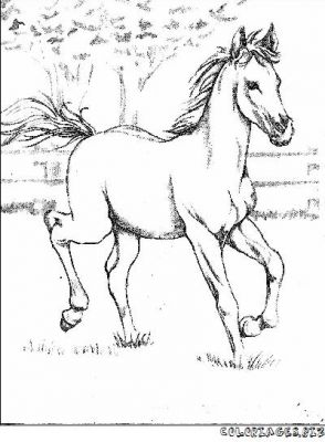 """L'image """"http://www.coloriages.biz/albums/photos/chevaux/normal_beau-cheval2.jpg"""" ne peut être affichée car elle contient des erreurs."""