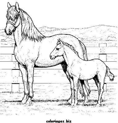 """L'image """"http://www.coloriages.biz/albums/photos/chevaux2/normal_coloriage_chevaux_1.jpg"""" ne peut être affichée car elle contient des erreurs."""