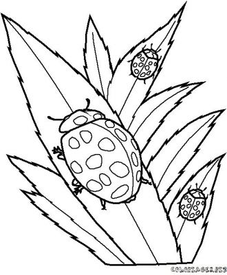 coloriage-coccinelle-13.jpg