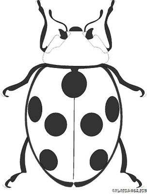 coloriage-coccinelle-4.jpg
