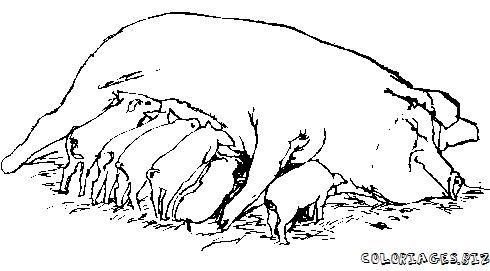 Coloriage Cochon Colorier.Coloriages Cochons Page 1 Animaux