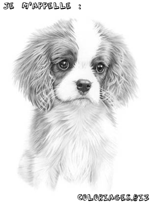 Index of albums photos coloriage chien - Chiot coloriage ...