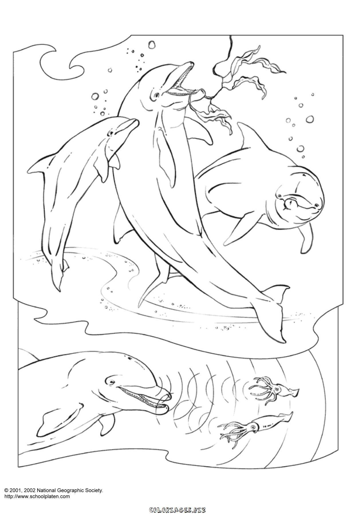 Coloriage dauphin a imprimer tres beau - Images dauphins a imprimer ...