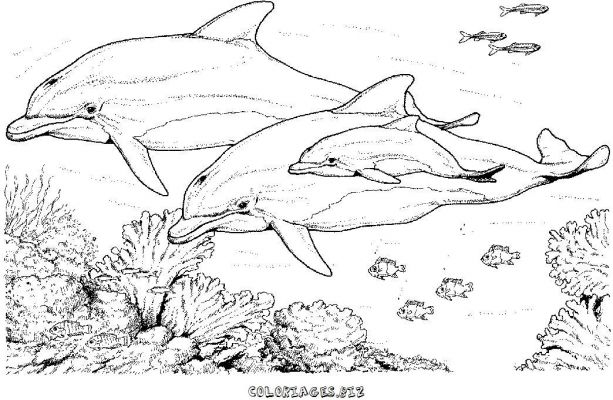 Coloriage Dauphin Mandala.Coloriages Dauphins Page 1 Animaux