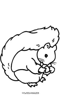 Dessin ecureuil - Coloriage petit ecureuil ...