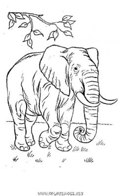 Coloriage Famille Elephant.Coloriages Elephants Page 1 Animaux