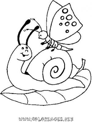 13_coloriage_escargot.JPG