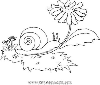 23_coloriage_escargot.JPG