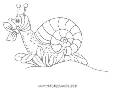 32_coloriage_escargot.JPG
