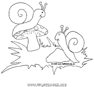36_coloriage_escargot.JPG