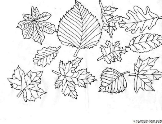 coloriage automne feuilles foret 12jpg