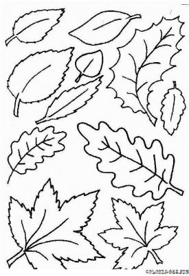 coloriage-automne-feuilles-foret-7.jpg