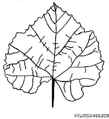 coloriage-feuille-foret-1.jpg