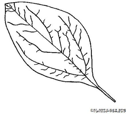 coloriage-feuille-foret-10.jpg