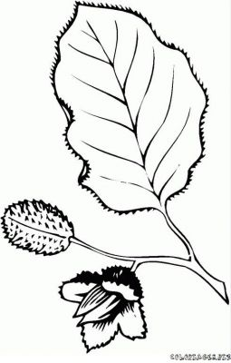 coloriage-feuille-foret-4.jpg