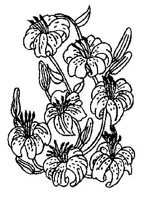Des fleurs - Coloriage frise fleurs ...