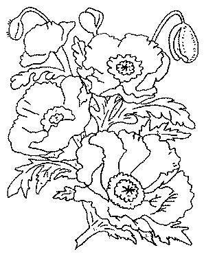 Coloriages fleurs et frises page 7 ecologie - Fleuriste dessin ...