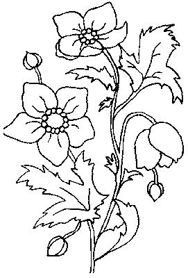 Coloriages fleurs et frises page 6 ecologie - Fleuriste dessin ...