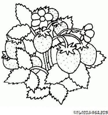 Dessin sur les fruit - Fruits coloriage ...