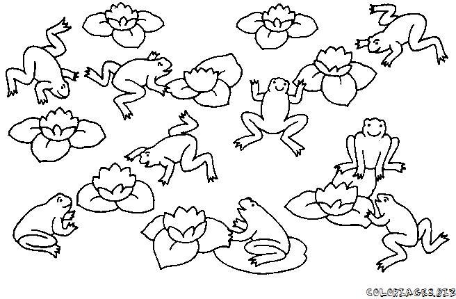 Dessin grenouille a colorier - Coloriage de grenouille ...