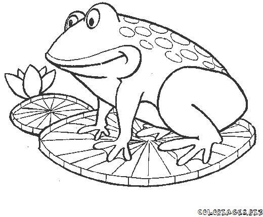 Image dessin de grenouille - Coloriage de grenouille ...