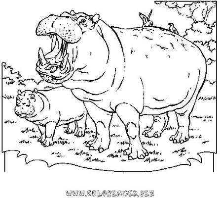Coloriages Hippopotame Page 1 Hippopotame