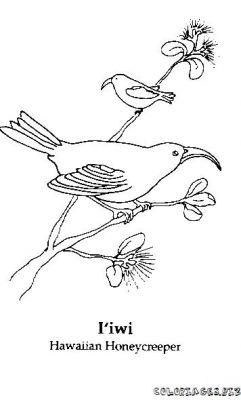 Coloriage en ligne oiseaux gratuit 1860 animaux - Coloriage en ligne animaux ...
