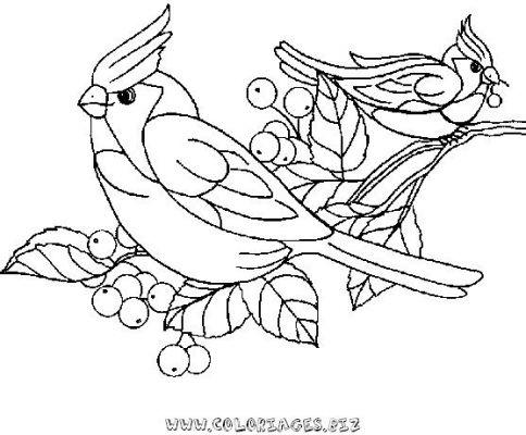 Coloriages oiseaux page 3 animaux - Oiseau coloriage ...