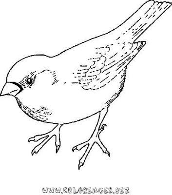 Coloriages oiseaux page 1 oiseaux - Dessin a imprimer oiseau ...