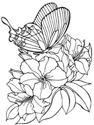 dessin de papillon - %BLOG_TITLE%