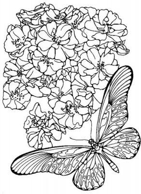 Coloriages papillons page 5 animaux - Image papillon a colorier ...