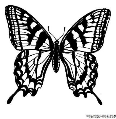 De papillon - Coloriage de papillon ...