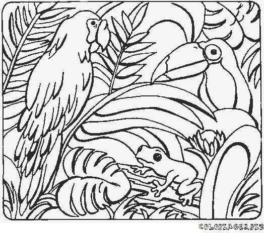 Coloriage de perroquet - Coloriage de perroquet ...