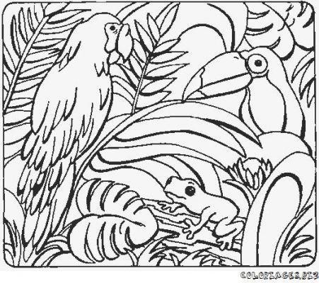 Coloriages perroquets page 1 perroquets - Dessins de perroquets ...