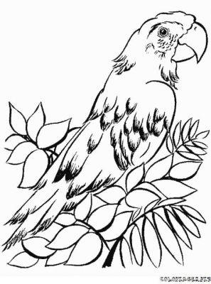Coloriage beau - Perroquet en dessin ...
