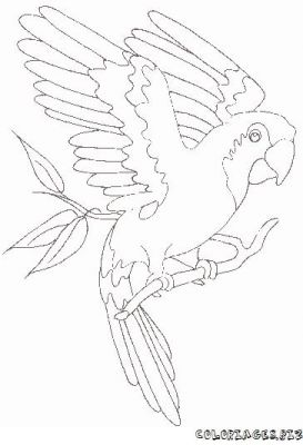 Twig colouring pages sketch coloring page - Perroquet dessin ...